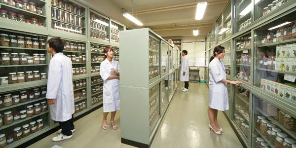 Trải nghiệm quá trình sản xuất, sử dụng thuốc tại Đại học Hokuriku
